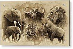 Big Five - Untamed Africa Acrylic Print by Basie Van Zyl