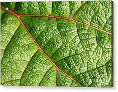 Big Green Leaf 5d22460 Acrylic Print by Wingsdomain Art and Photography