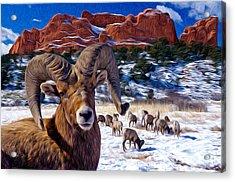 Big Horn Sheep At The Garden Acrylic Print