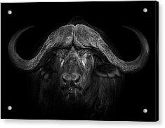 Big Horns Acrylic Print by Mario Moreno