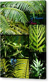 Big Island Of Hawaii Ferns 2 Acrylic Print by Colleen Cannon