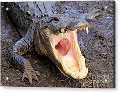 Big Mouth Acrylic Print by Adam Jewell