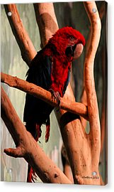 Big Red Acrylic Print by Dick Botkin