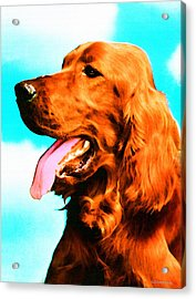 Big Red - Irish Setter Dog Art By Sharon Cummings Acrylic Print