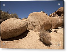 Big Rock Acrylic Print by Amanda Barcon