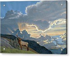 Big Sky-bull Elk Acrylic Print by Paul Krapf