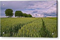 Big Sky Montana Wheat Field  Acrylic Print