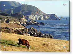 Big Sur Cow Acrylic Print by James B Toy