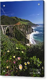 Big Sur Wildflower Bloom  Acrylic Print by George Oze