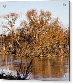 Big Tree Colored Coloured #orange By Sun On January 2  2015 Besides The Creek Of Enkoping Acrylic Print by Leif Sohlman