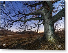 Big Wood Acrylic Print by Kristopher Schoenleber
