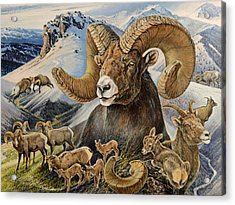 Bighorn Lifescape Acrylic Print by Steve Spencer