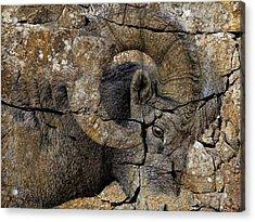 Bighorn Rock Art Acrylic Print