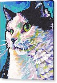 Billi Cat Baby Acrylic Print