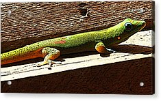 Binky The Gecko Acrylic Print by Colleen Cannon