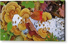 Birch And Fungi Acrylic Print