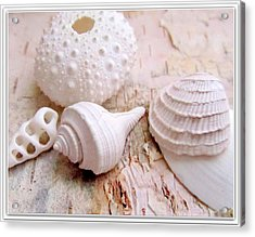 Birch And Shells Acrylic Print