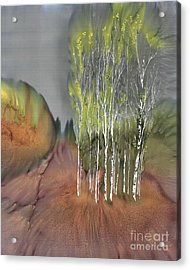 Birch Grove 1 Acrylic Print