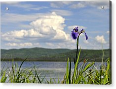 Acrylic Print featuring the photograph Birch Lake Iris by Cathy Mahnke