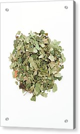Birch Leaves Acrylic Print by Geoff Kidd/science Photo Library