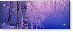 Birch Tree At A Riverside, Vuoksi Acrylic Print