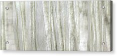 Birch Tree Impression No 1 Acrylic Print by Andy-Kim Moeller