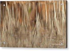 Birch Tree Reflections Acrylic Print by Alan L Graham