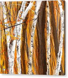 Birch Trees Autumn Acrylic Print by Lourry Legarde