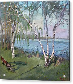 Birch Trees By The River Acrylic Print by Ylli Haruni