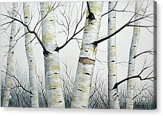 Birch Trees In The Forest By Christopher Shellhammer Acrylic Print