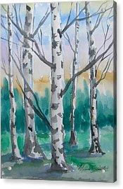 Birch Trees Acrylic Print by Melinda Saminski