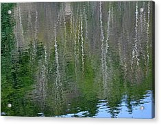 Birch Trees Reflected In Pond Acrylic Print