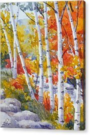 Birches Along The River Acrylic Print