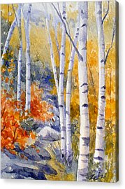 Birches Along The Trail Acrylic Print