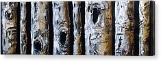 Birches In A Row Acrylic Print by Lori McPhee