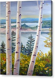 Birches In Nova Scotia Acrylic Print