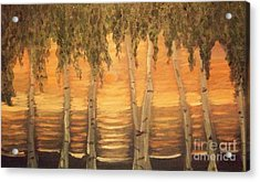 Birches In The Sun Acrylic Print