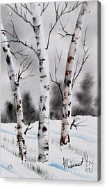 Birches Acrylic Print by Mohamed Hirji
