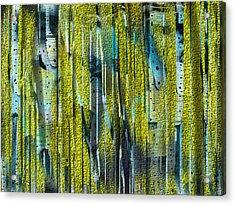 Birches Acrylic Print by Yul Olaivar