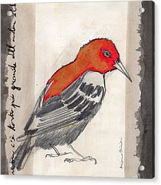 Bird 17 Acrylic Print by Marco Sivieri