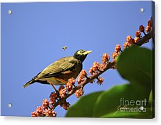 Acrylic Print featuring the photograph Bird And Bee by Suzette Kallen