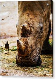 Bird And Rhino Acrylic Print