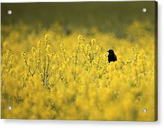 Bird And The Bees Mg_9150 Acrylic Print by David Orias