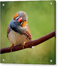 Bird Art - Change Your Opinions Acrylic Print