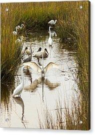 Bird Brunch 2 Acrylic Print