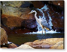 Bird By A Waterfall  Acrylic Print by Sarah Mullin