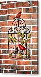 Bird Cage Decor Acrylic Print by James Potts