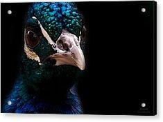 Bird Acrylic Print by Christine Sponchia