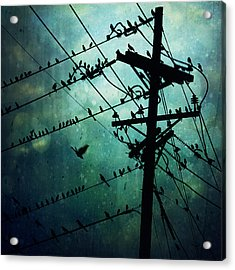 Bird City Acrylic Print