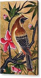 Bird Acrylic Print by David Shumate